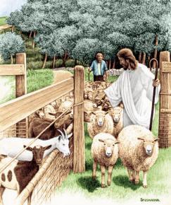 sheep-goats
